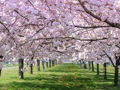 次世代の桜区へ